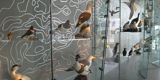 Bird exhibition in visitor centre